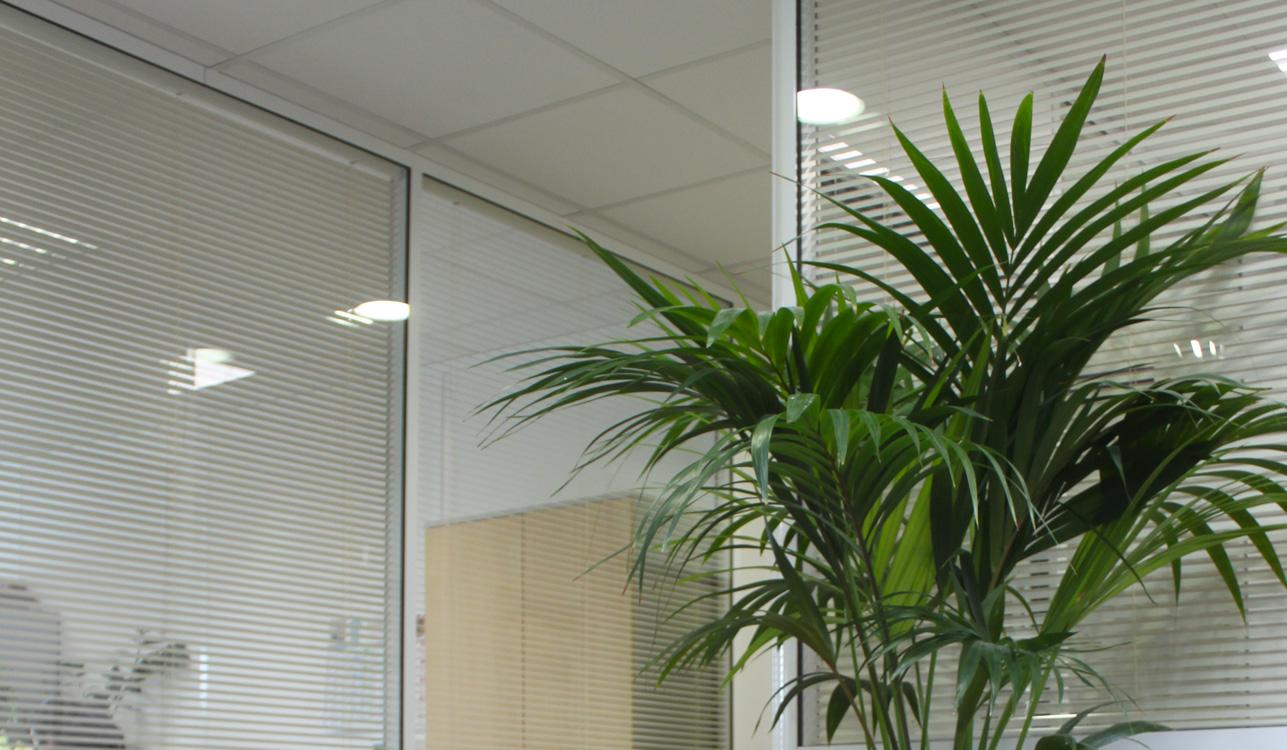 location-plantes-vertes-Esat-Marville